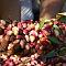 frische Pistazien in Fruchtfleisch